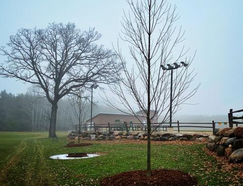 Jared Hook Donates Trees